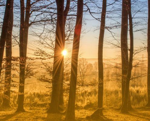 CONCORDANCE CONSEIL forêt méthodes