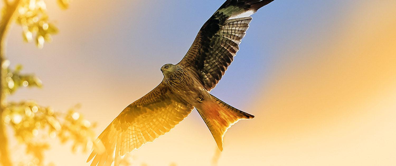 CONCORDANCE CONSEIL faucon hauteur 2